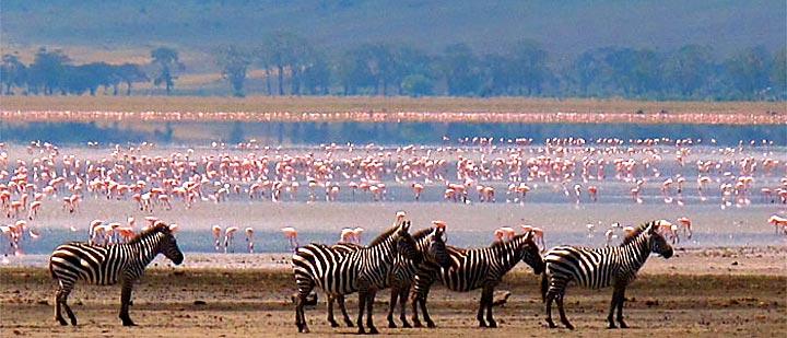Lake Manyara National Park - Elite Travel Journey AfricaElite Travel Journey Africa