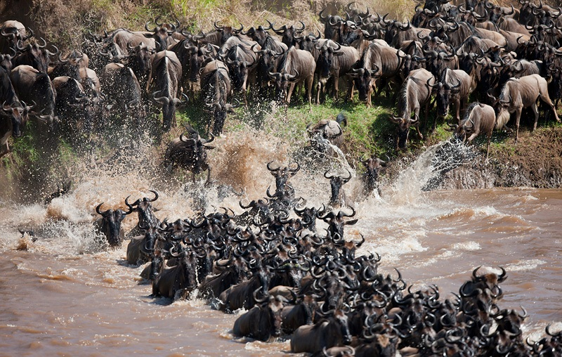 Mara Great Migration